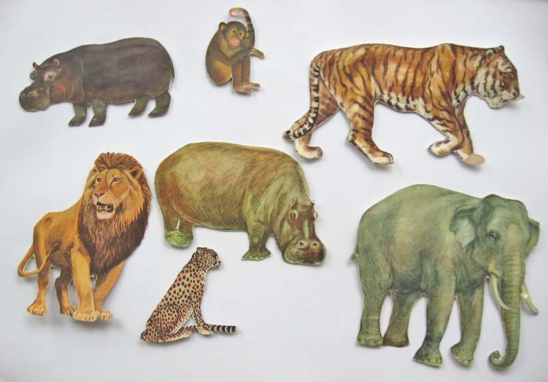 Тварини тропічних лісів зображення